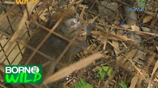 Born to Be Wild: Confiscated monkeys at the Cebu Wildlife Rescue Center