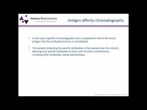 Antibody purification – what you need to know to use antibodies effectively