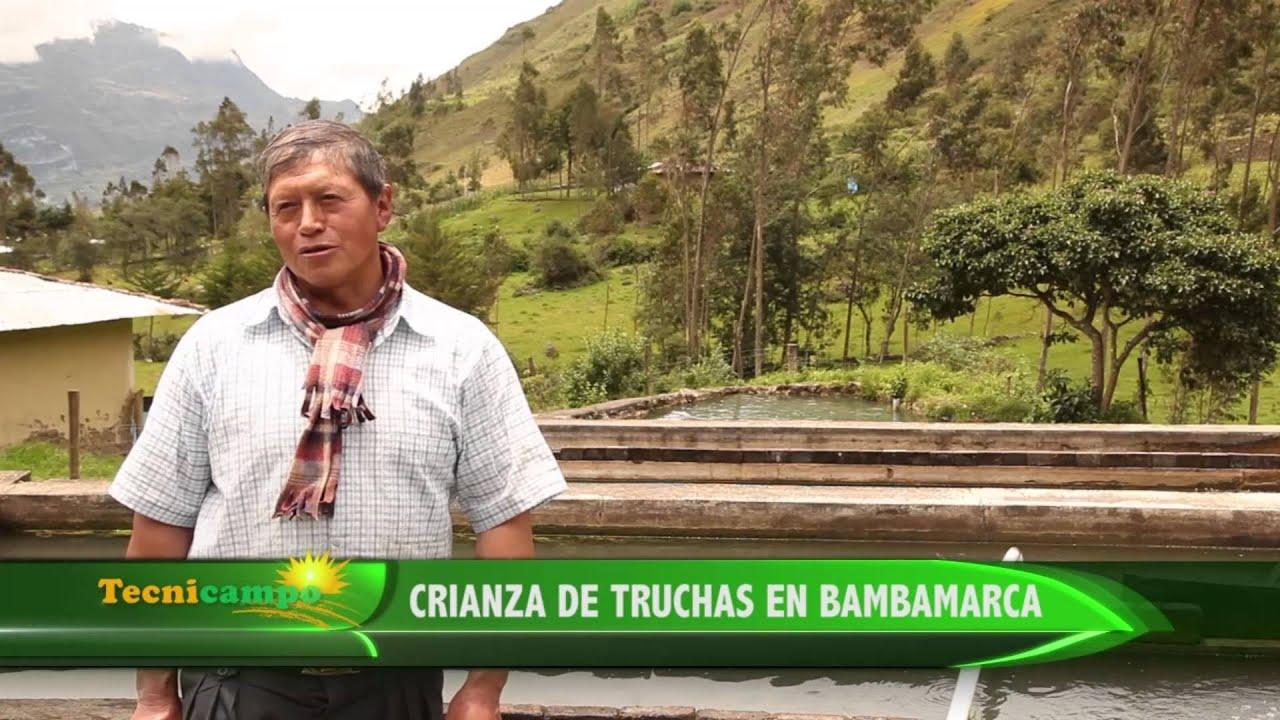 Crianza de truchas en bambamarca youtube for Crianza de truchas en estanques