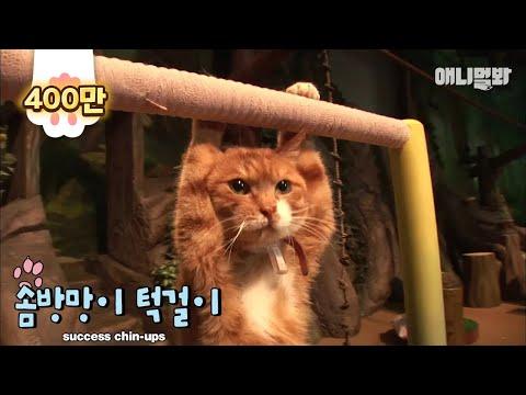(개냥이 주의) 턱걸이하는 고양이 / 길고양이들 캣스타된 썰