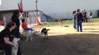 Play Day At K9 Training Solutions