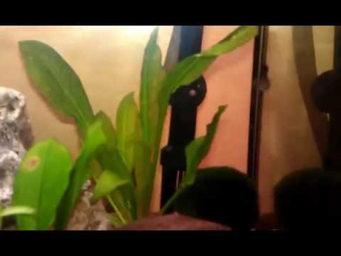 Filtro acquario esterno fai da te youtube for Filtro esterno laghetto fai da te