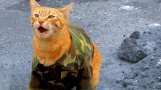 Behind the Scenes - Medal of Honor Cat thumbnail
