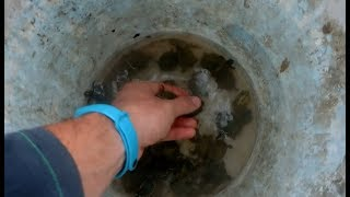 Nacimiento de tortugas de orejas rojas