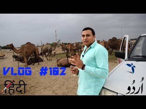VLOG #102 Saudi Arabia Camel & desert
