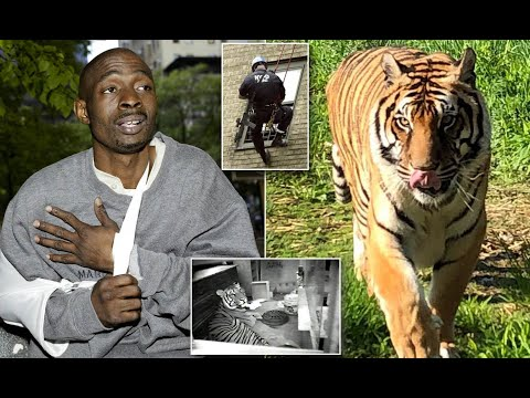 HARLEM RAPPER WHO LIVED IN THE PROJECTS WITH A 500 POUND TIGER