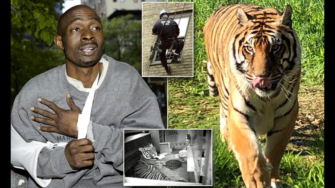 THE RAPPER WHO LIVED WITH A 500 LB. TIGER IN A HARLEM PROJECT APARTMENT!!