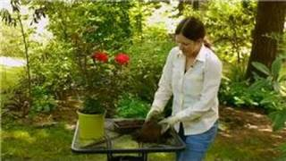 Care for Knockout Roses : How Do I Prepare the Soil for Planting Rose Bushes?