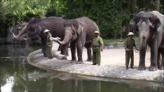 シンガポール動物園 Singapore Zoo 2015
