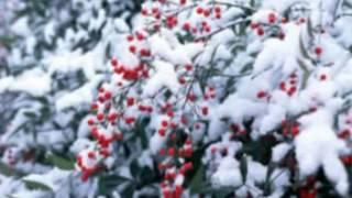 Сакура под снегомu (Падает снег) Киёхико Озани (Япония)