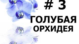 Бисероплетение (Голубая Орхидея 3 ч.) Мастер-класс