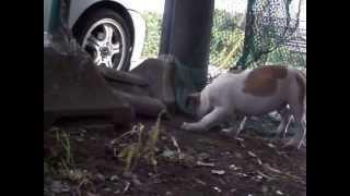 裏庭で遊んでいます。2013年7月撮影。 http://nokoheri.web.fc2.com/ind...