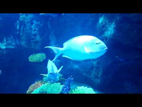 Sea world live broadcast from Siam Paragon Bangkok