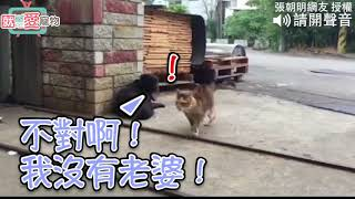 養貓咪的人都知道,貓咪常常會有一股無名火莫名其妙就燒了起來.....
