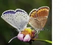 Урок бабочки  Как добиться успеха!