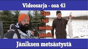 Osa 43 - Jäniksen metsästystä - kausi 2019/2020