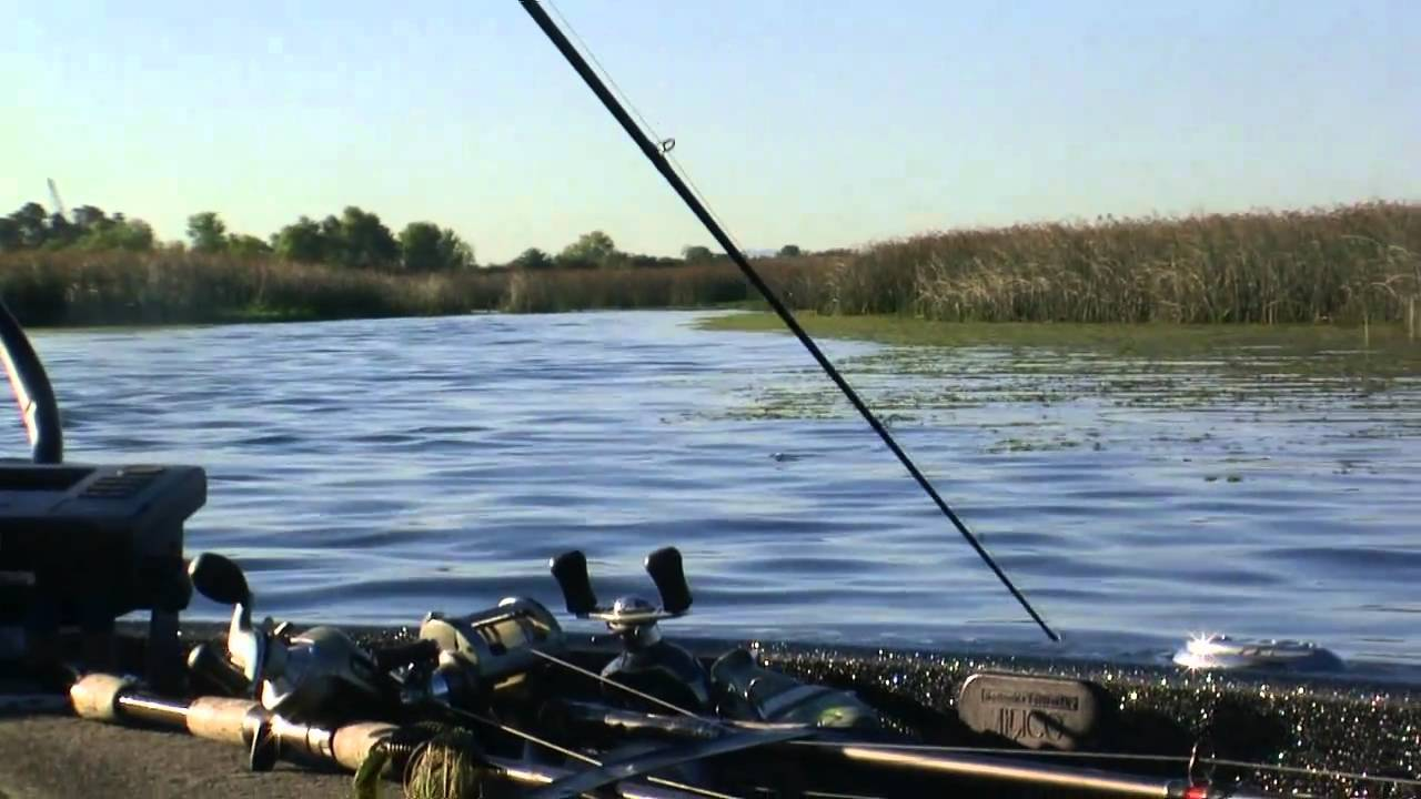 California delta bass fishing guide rus snyders youtube for Ca delta fishing report
