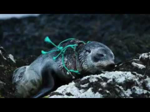 The effects of ocean pollution