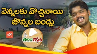 Vennalaku Vochinayi Jonnala Bandlu Song By Singer Sai Krishna Latest Telangana Folk Songs YOYO TV