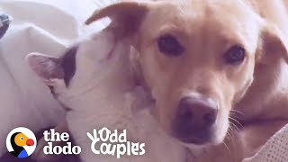 Dog Loves To Be Groomed By Her Cat Brother | The Dodo Odd Couples