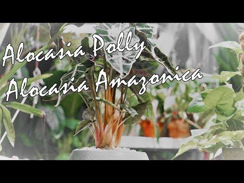 Houseplant Ivy Care YouTube