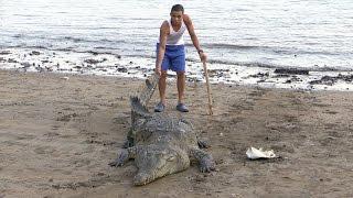 Что Будет Если Дикого Крокодила Таскать за Хвост
