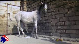 Touching Story of Horse Injured in Fight Aginst ISIS
