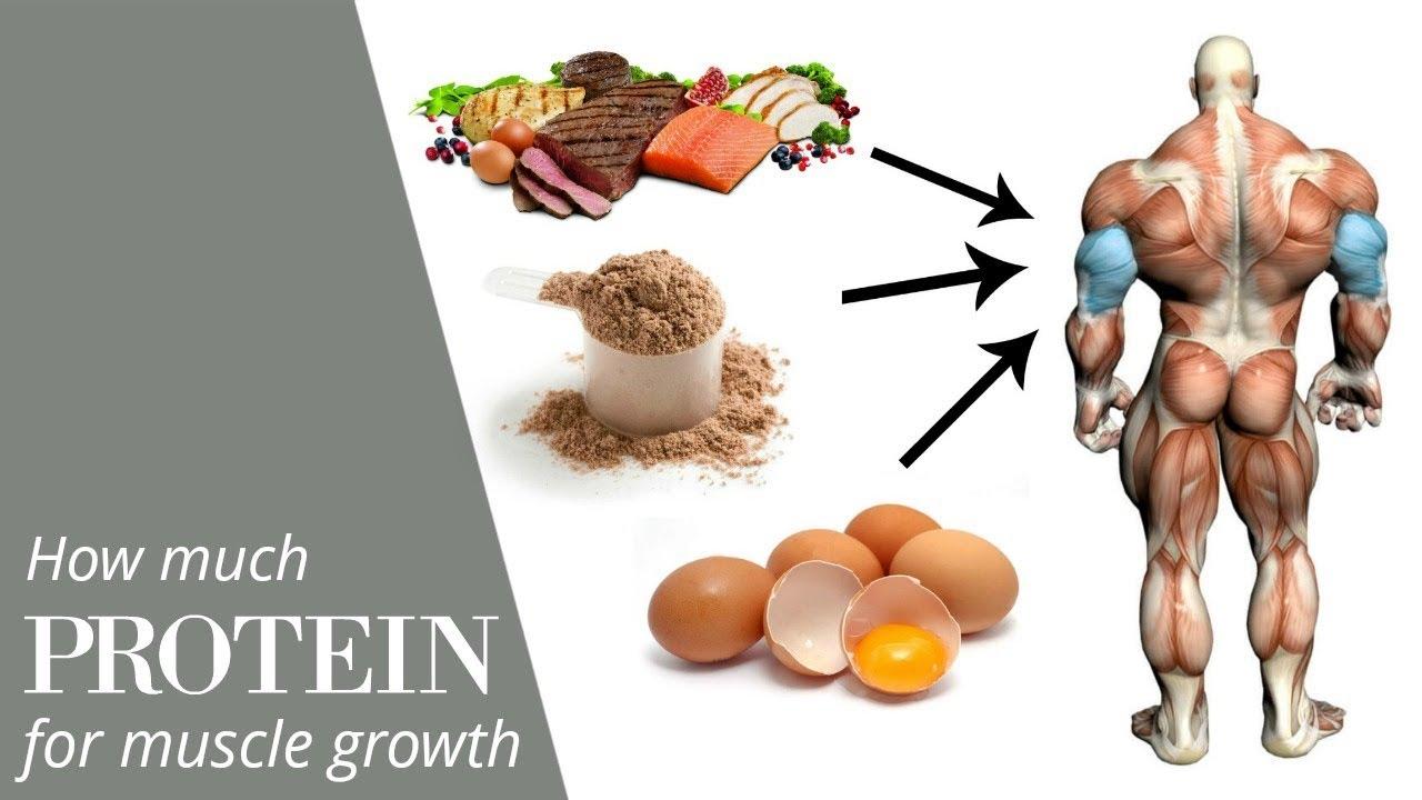 Increase muscle decrease fat
