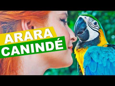 VOCÊ CONHECE A ARARA-CANINDÉ? | SHOP ANIMAL