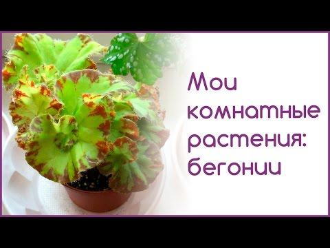 Как спасти больные растения  Фитоспорин М Реаниматор