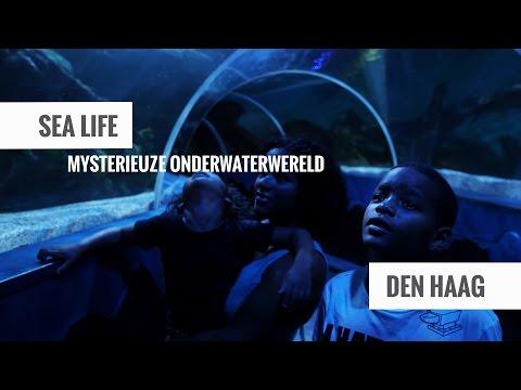 Den Haag - SEA LIFE Scheveningen