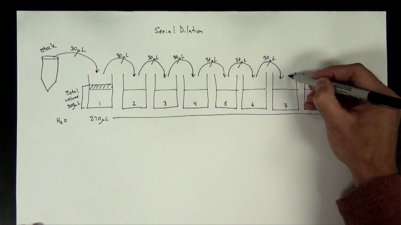 Concentrations Part 5 Serial Dilution Youtube If So Is There A Way To Include This Schematic In The Mix I Can