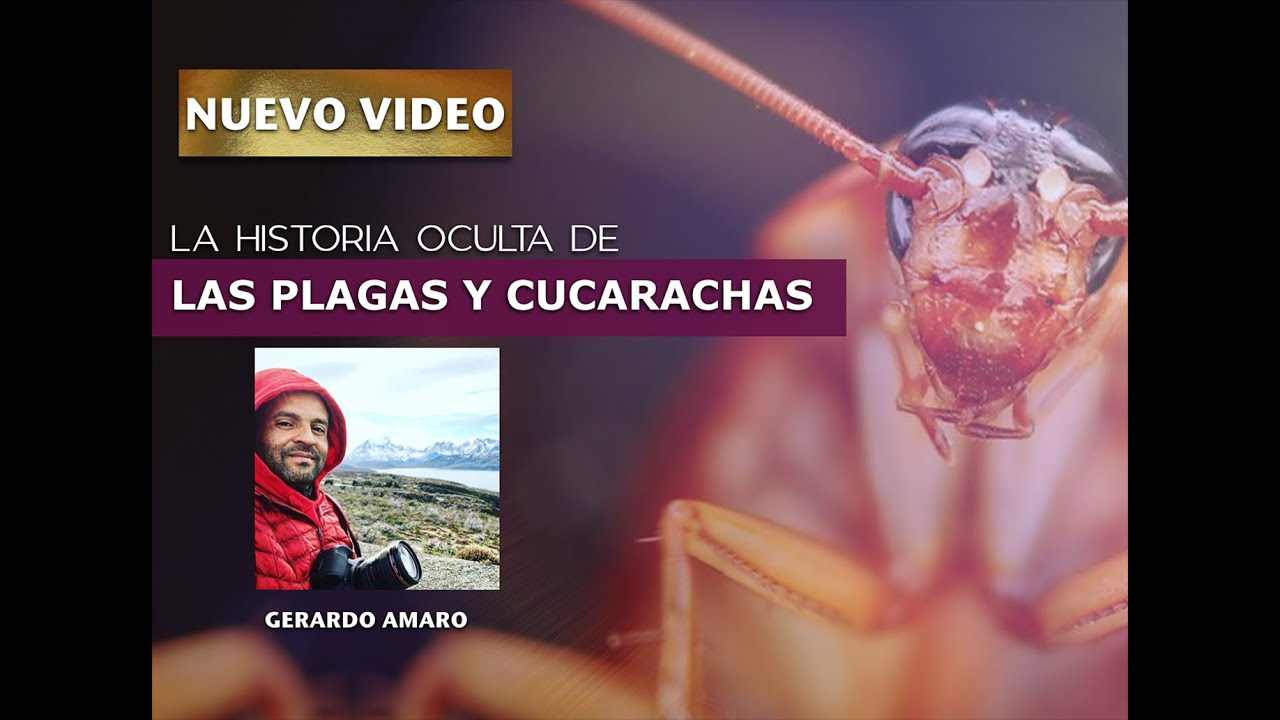 La Historia Oculta de las Cucarachas y Plagas
