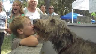 Irish Wolfhound Kissing Booth SLO MO