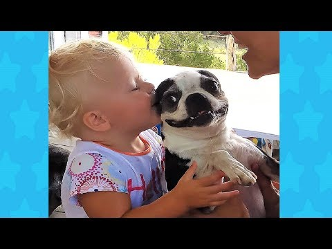 Boston terrier dog makes Baby belly laugh cute ever!!! Dog loves Baby Videos