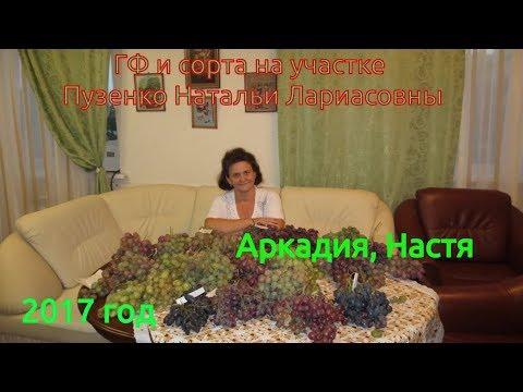 Виноград Аркадия, Настя  (Пузенко Наталья Лариасовна)