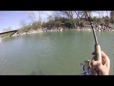Steelhead Fishing In Cattaraugus Creek