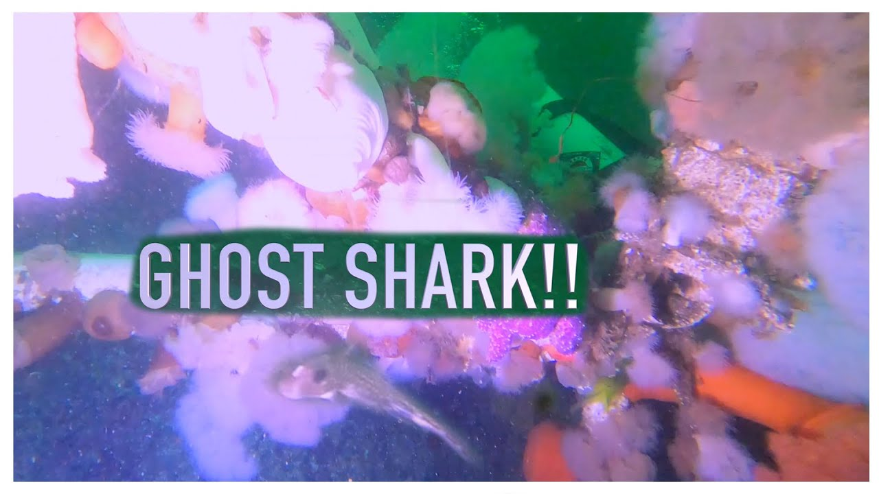 GHOST SHARK Located 101 FT Underwater With Sam Sam The Adventure man