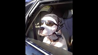 Funniest Dogs - Try Not To Laugh - Best Of Funny Animal Videos !!3