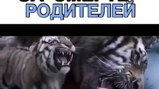 Фильм круто песни музыка видео приколы лучшее природа ужас мужчина поле  животные тигры