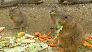 東山動植物園にて。2011年1月撮影) http://manyamou01.exblog.jp/ ブロ...