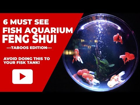 How To Avoid Bad Fish Aquarium Feng Shui To Attract Better Luck?