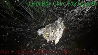Lưới Bẫy Nhát Hoa - Lưới Bẫy Chim Đêm Gía Rẻ - Lưới Bẫy Cúm Núm - Lưới Bẫy Chằng Nghịch, Trích Ré.