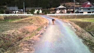14才のおばあちゃんなので、かなりマイペースなお散歩です(*´ー`*)