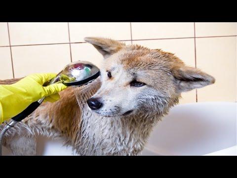 Curso Tosas em Cães e Gatos e Acidentes em Pet Shop - Acidentes