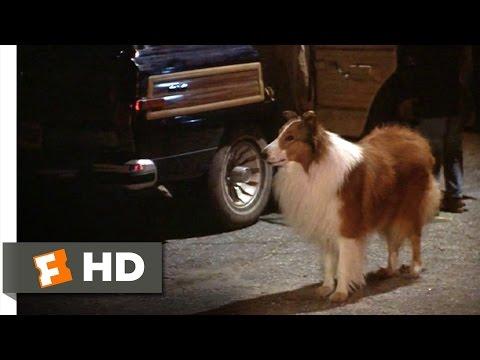 Lassie 19 Movie   Can We Keep Her? 1994 HD