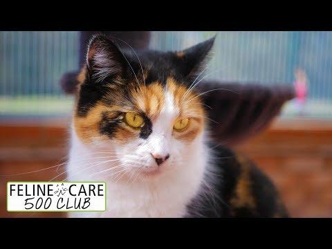 Feline Care 500 Club Draw March 2018