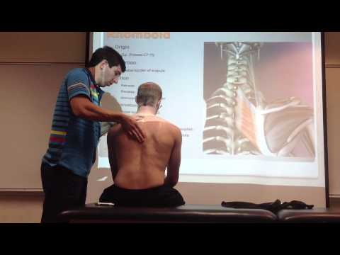Rhomboid: Manual Therapy, Palpation and Stretch
