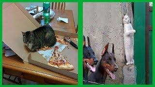 Ces 20 photos qui montrent que les chats sont tous assez fous