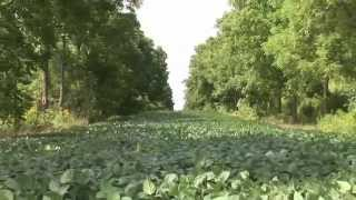 6. Canadian Intercropping Project Research Results video